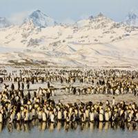 ¿Cómo está afectando el cambio climático a las especies que viven en la Antártida?