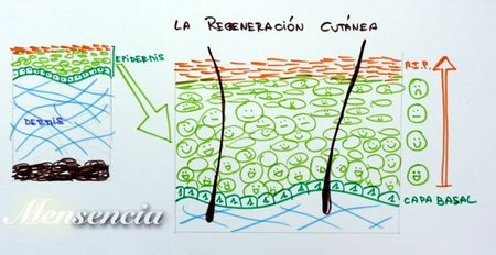 la-regeneracion-cutanea