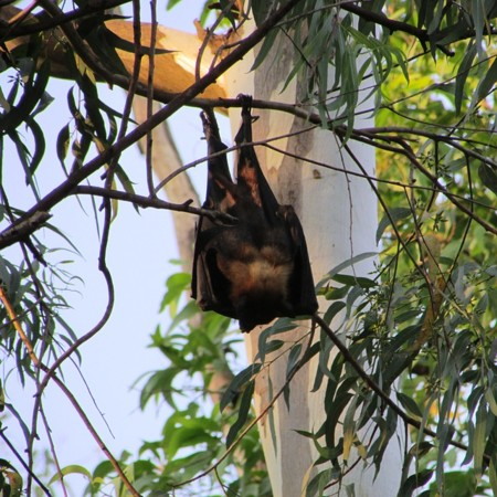 Bats 300857 640