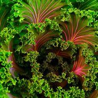 7 razones saludables por las cuales deberías comer más kale