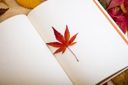 Devoradoras de libros: atención a los 17 mejores títulos del otoño