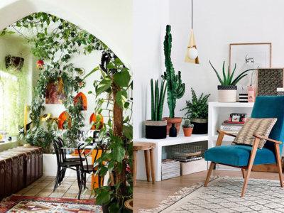 17 ideas para decorar tu sala de estar con plantas en esta primavera