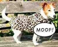 Concurso de pantallas falsas de Leopard