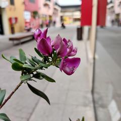 Foto 8 de 52 de la galería oneplus-7-galeria-fotografica en Xataka
