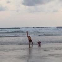 Sesiones de yoga matinal by Pataky: mejor si son con India Rose
