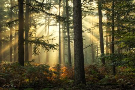 Martin Podt Forest 5