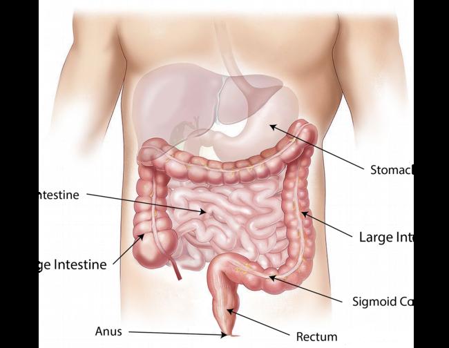 Magazine - anatomia