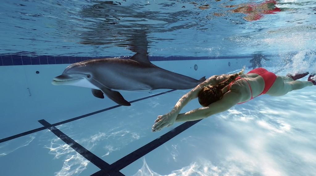 Crean un delfín robot para sustituir a los que están en cautiverio en acuarios: así nada a interactúa con humanos