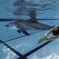 Crean un delfín robot para sustituir a los que están en cautiverio en acuarios: así nada e interactúa con humanos