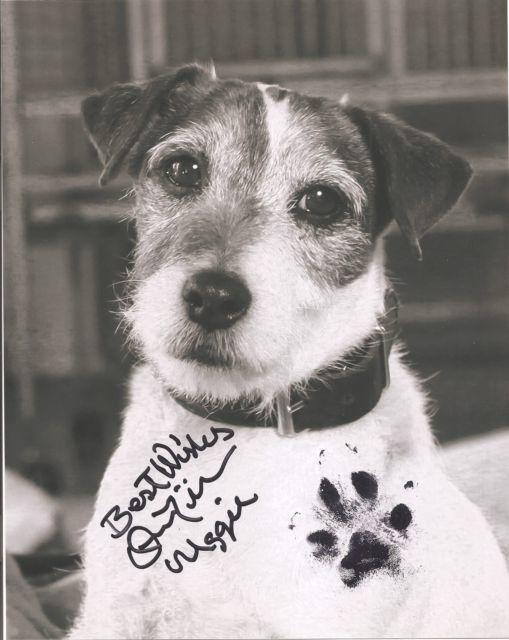 Foto de Fotos de Uggie, el perro de 'The Artist' (1/8)