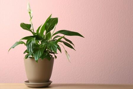 Plantas de interior Leroy Merlin