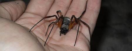 ¿Y si usamos la seda de las arañas como conductor del calor?