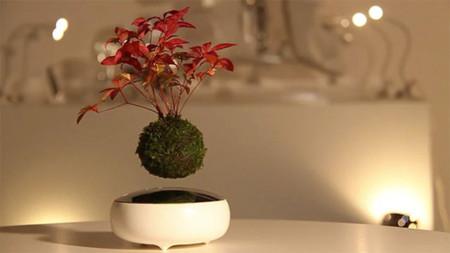 ¿Qué es mejor que un árbol bonsái? Pues un bonsái que flota