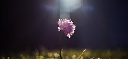 Nueve trucos y consejos para conseguir fotos de flores más creativas y originales