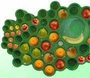 El Fruitree es un frutero que conserva por mas tiempo la fruta.
