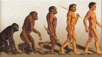 El resultado de relaciones sexuales entre distintos homínidos