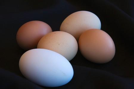 1200px Biodiversidad En Huevos De Gallina