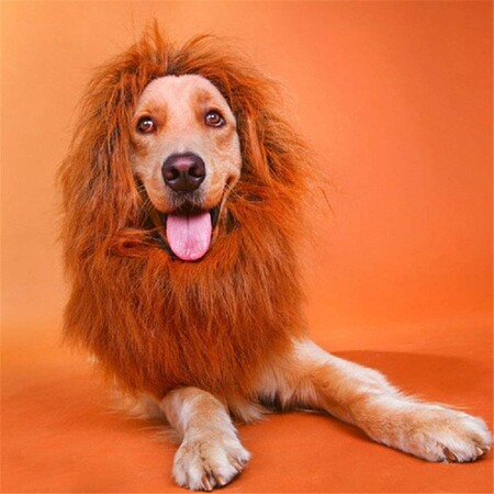 Nueve disfraces para mascotas de Amazon con los que celebrar Halloween por menos de 15 euros