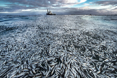 C Audun Rikardsen Wildlife Photographer Of The