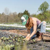 ¿Es la comida orgánica mejor para ti o para el medio ambiente? Las dudas en torno a sus beneficios
