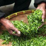 5 clases de té que seguramente no conocéis