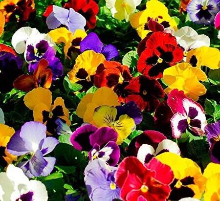 Flores para la terraza