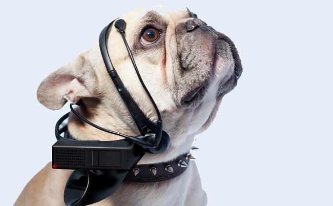 """En 10 años podrás """"hablar"""" con tu perro, aseguran en Amazon"""
