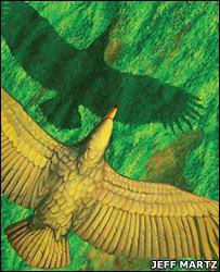 El vuelo del pájaro más grande jamás conocido
