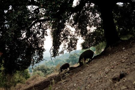 Foto Serrania De Ronda Monte Adehesado