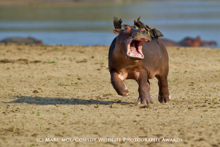 Highly Commended Marc Mol