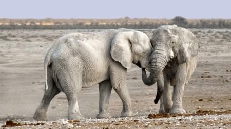 Hay quien quiere liberar elefantes por Europa (y es una idea mucho más sensata de lo que parece)