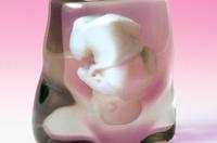 Curioso regalo para las embarazadas: una réplica del feto