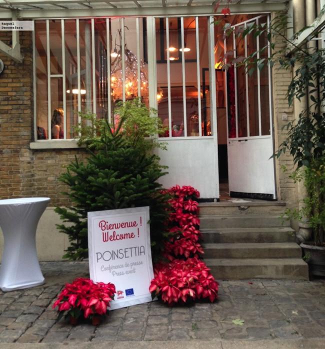Poinsettia Deco Navidad