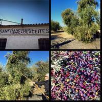 Oleoturismo: Mitos, verdades y mentiras sobre el aceite de oliva que debes conocer antes de viajar a Jaén