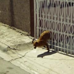 Foto 19 de 32 de la galería google-street-view-fotos-por-jon-rafman en Xataka Foto