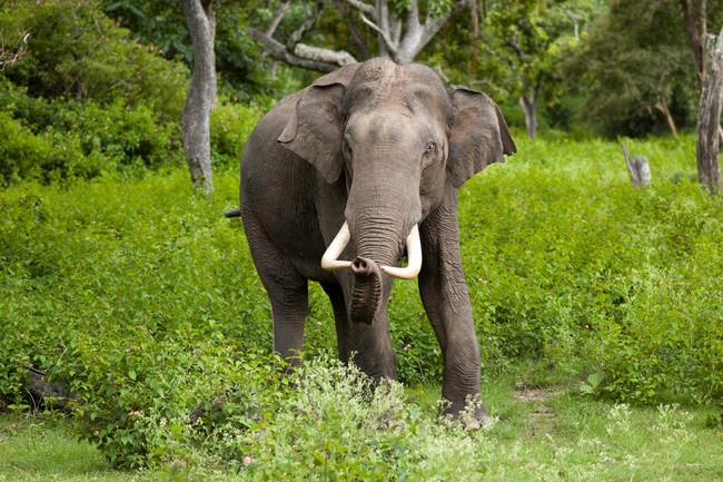 Elefante Dos