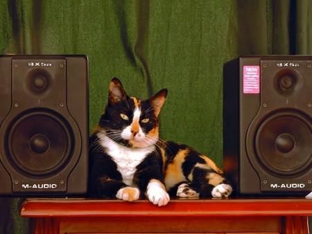 Spotify también te descubrirá la música favorita de tu mascota (o eso dicen) con su nueva 'playlist' para animales