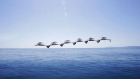 Ornitografias 11