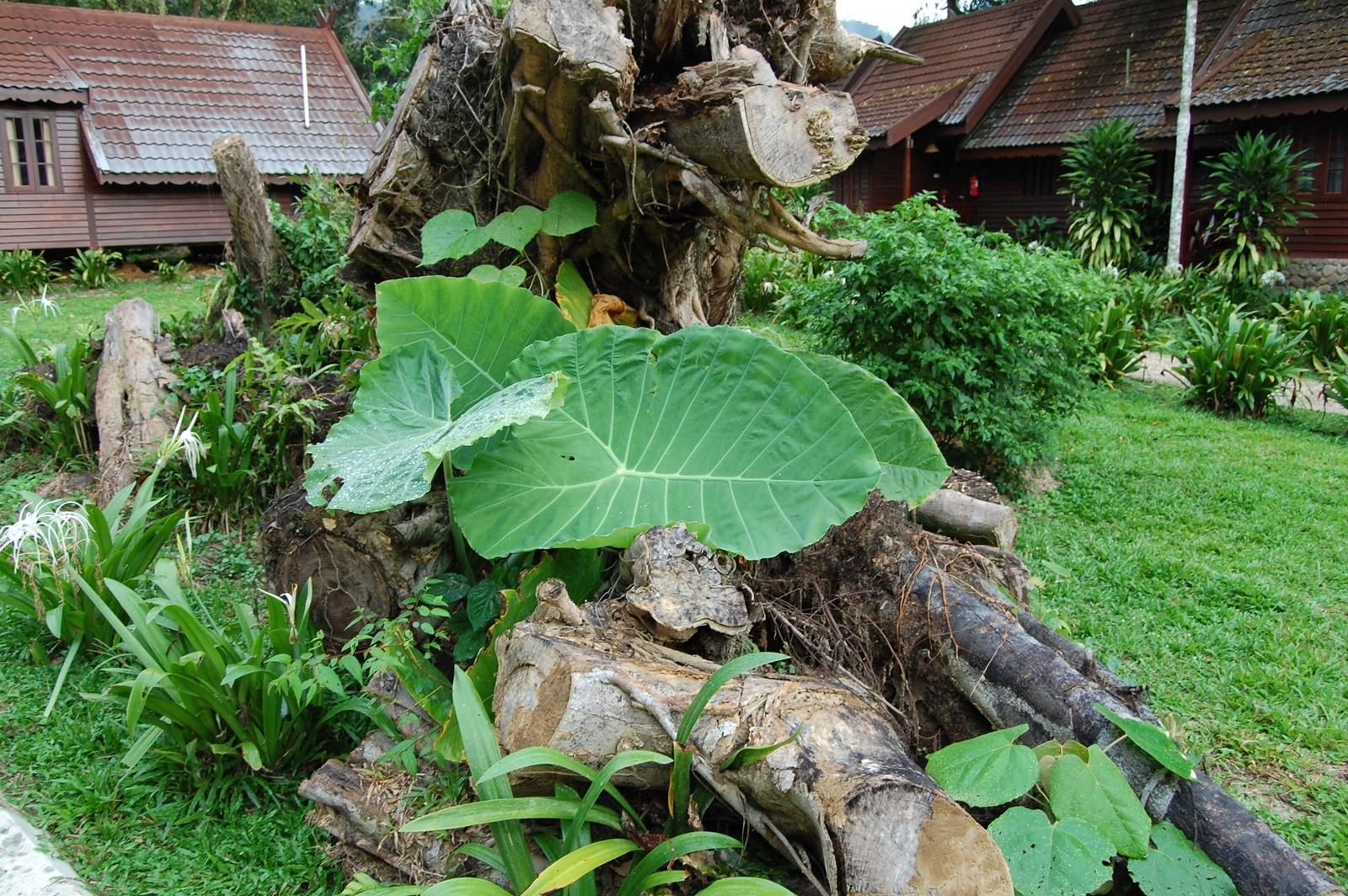 Foto de Visitando Malasia 5º y 6º días (51/77)