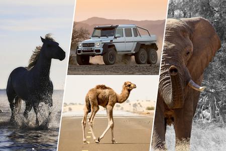 El camello, el elefante y el caballo: nuestra selección de autos para los Reyes Magos