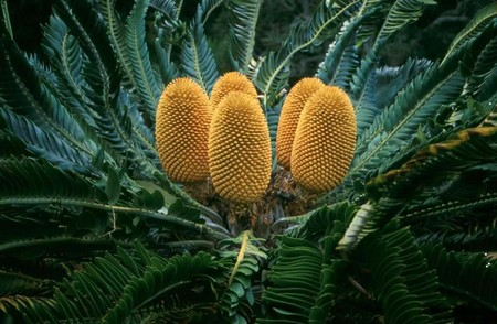Esta es la planta que resulta más improbable que veas en todo el mundo