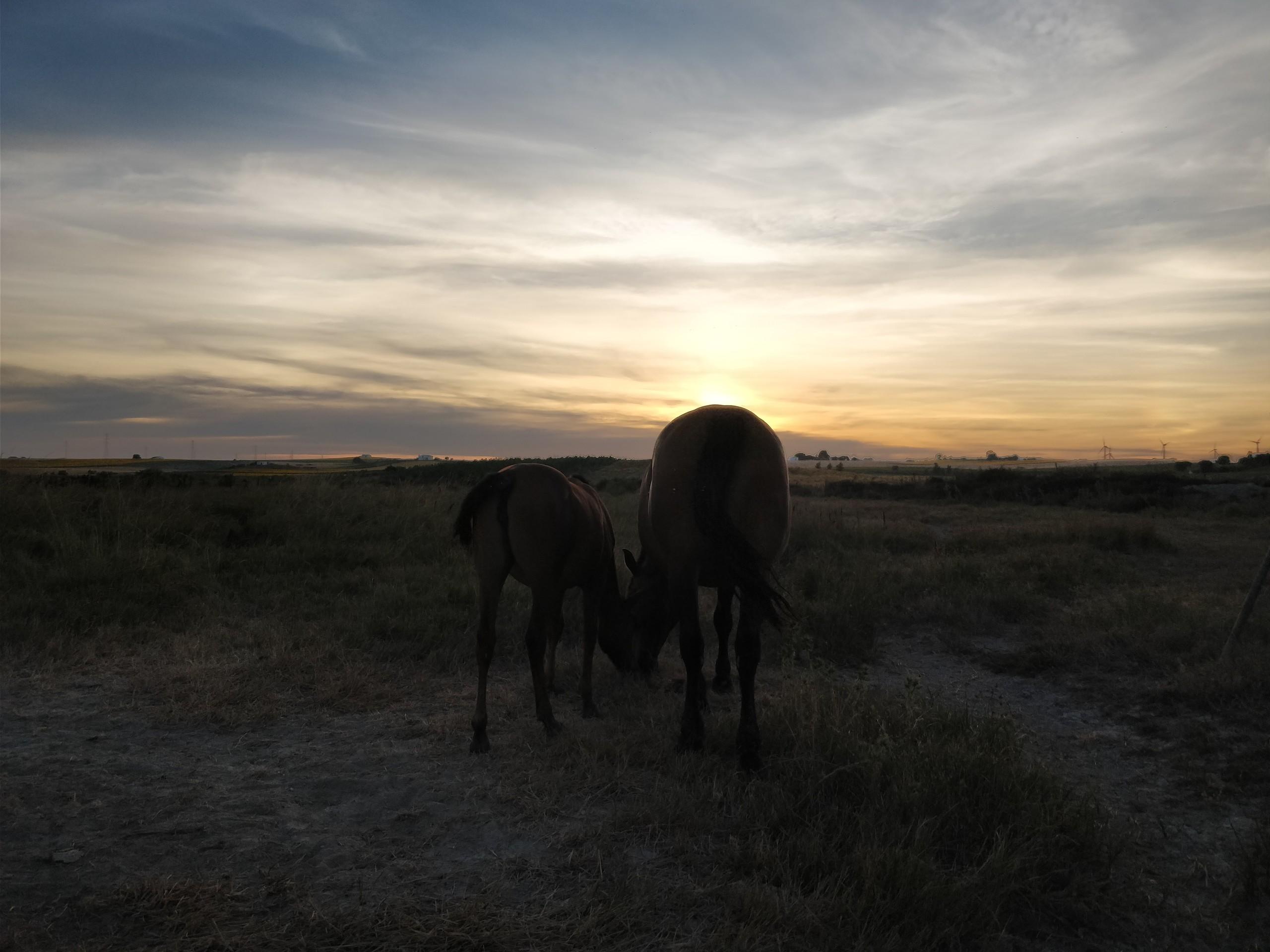 Foto de Fotos con OnePlus 5 (11/26)