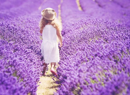 Los románticos campos de lavanda de Mayfield Lavender Farm