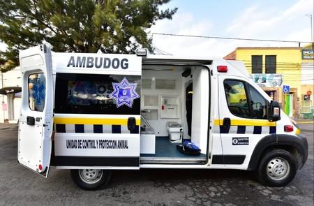 Ambudog, la primera ambulancia en México creada para atender perros y gatos en situación de calle