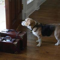 Alojamiento gratuito por todo el mundo a cambio de cuidar mascotas