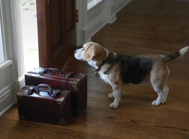 Trustedhousesittersalojamiento Gratuito Por Todo El Mundo A Cambio De Cuidar Mascotas