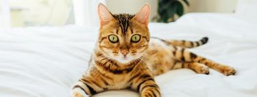 ¿Amante de los animales? Guía deco para tener una casa bonita y hacer feliz a tu mascota