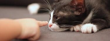 Tener un gato como mascota ayudaría a reducir la ansiedad en los niños con autismo