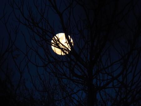 Luna Llena Azul Desnfoque