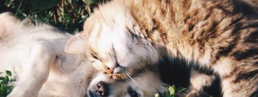 Cómo fotografiar mascotas (I): Trucos para lograr mejores fotos de gatos